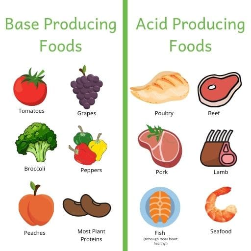 Pictures of base vs. acid producing foods. A renal diet should include more base instead of acid producing foods. Examples of base producing foods: tomatoes, grapes, broccoli, peppers, peaches and most plant proteins. Examples of acid producing foods: poultry, beef, pork, lamb, fish and seafood.